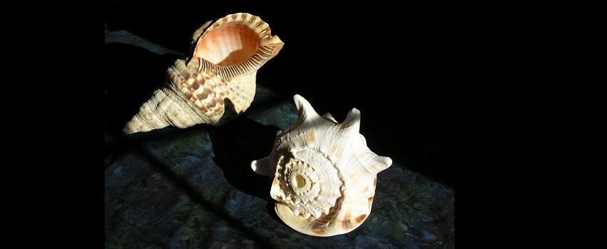 <b>Sea Shells:</b> When Niche Players Become Gorillas